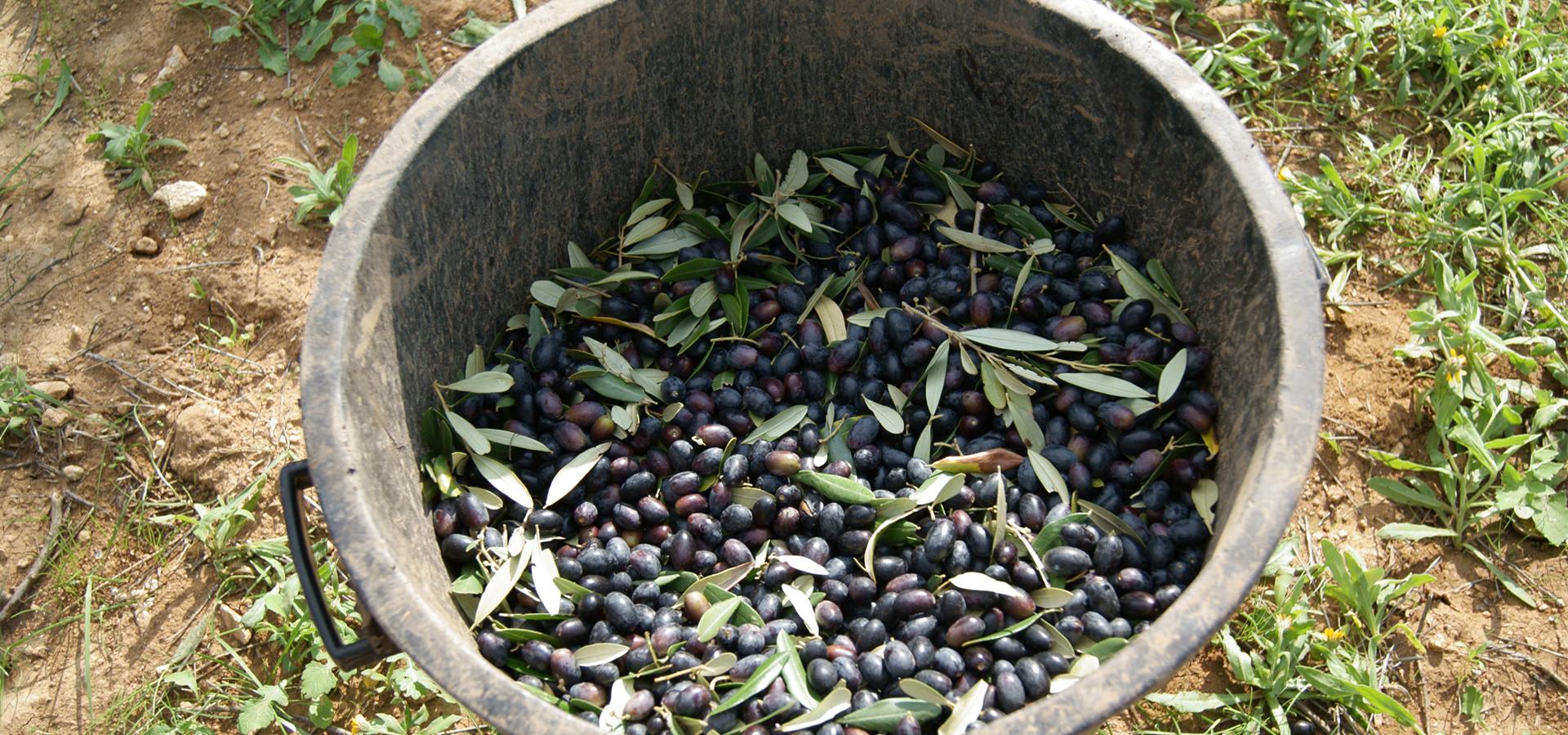 Olio Evo Cos'è: tutto sull'olio extravergine d'oliva